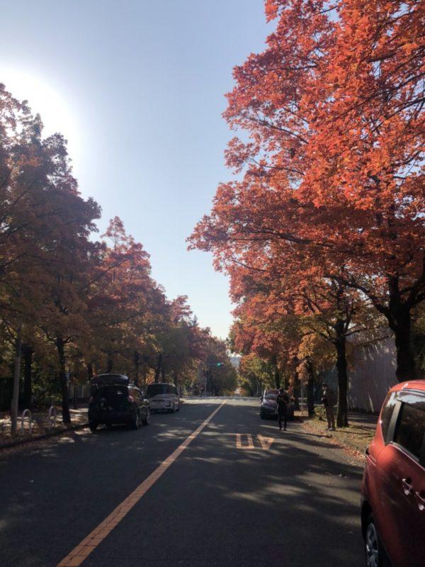 大阪の紅葉2